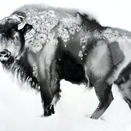 (CreativeWork) Wintery Bison2 by Soo Beng Lim. Drawings. Shop online at Bluethumb.