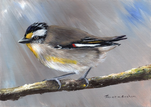 (CreativeWork) Striated Pardalote by Janet Graham. Acrylic Paint. Shop online at Bluethumb.