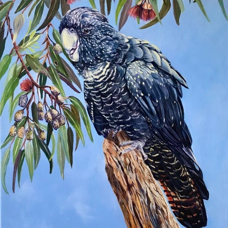 (CreativeWork) Gum Nuts by Jenine Bell. Oil Paint. Shop online at Bluethumb.