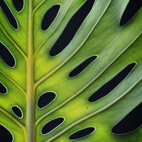 (CreativeWork) Monstera Deliciosa Ed. 1 of 100 by Nadia Culph. Photograph. Shop online at Bluethumb.