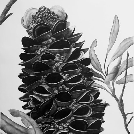 (CreativeWork) Middle Head Banksia 1 by Ro Geddes. Drawings. Shop online at Bluethumb.