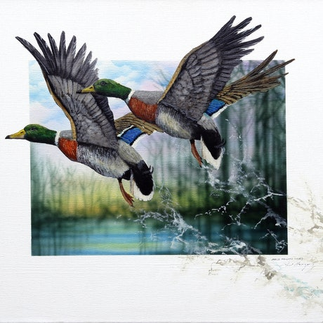 (CreativeWork) Male Mallard Ducks by Paul Margocsy. Mixed Media. Shop online at Bluethumb.