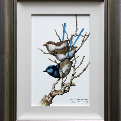(CreativeWork) Superb Blue Wrens by Paul Margocsy. Watercolour Paint. Shop online at Bluethumb.