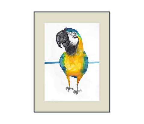 (CreativeWork) Macaw - Sale  by John Graham. Mixed Media. Shop online at Bluethumb.