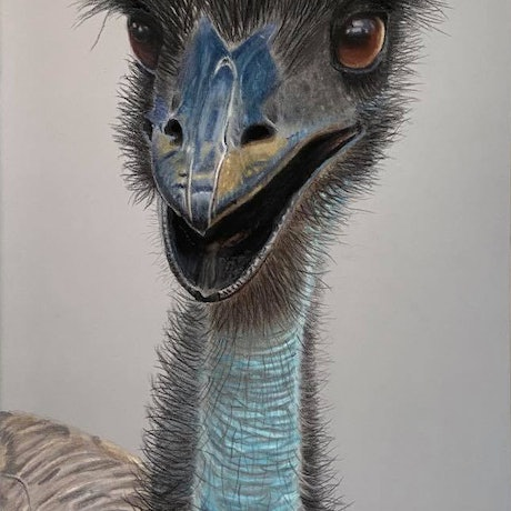 (CreativeWork) Happy Emu by Gary Thomas. Other Media. Shop online at Bluethumb.