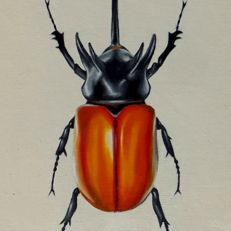 (CreativeWork) Eupatorus gracilicornis by Marija Skroza. Oil Paint. Shop online at Bluethumb.