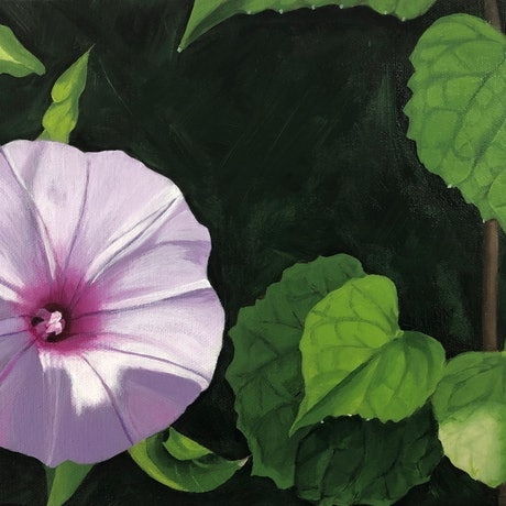 (CreativeWork) Morning Glory by Patricia Hillard. Acrylic Paint. Shop online at Bluethumb.