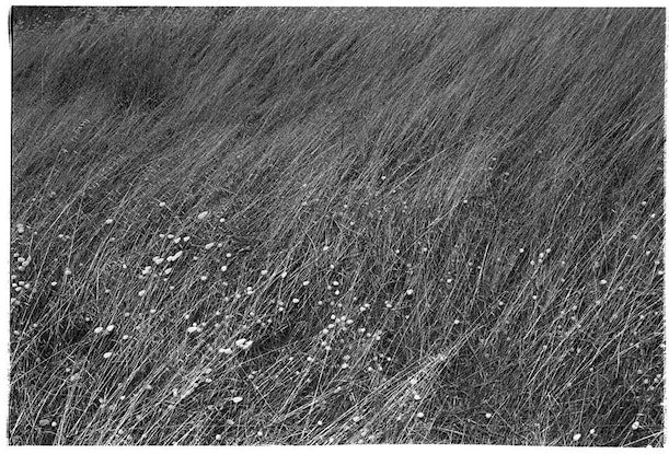 (CreativeWork) Field of Wind Ed. 1 of 3 by Alex Frayne. Photograph. Shop online at Bluethumb.