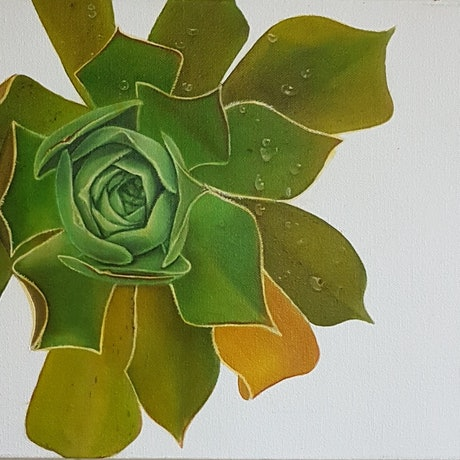 (CreativeWork) the succulent by Claire Souter. Oil Paint. Shop online at Bluethumb.