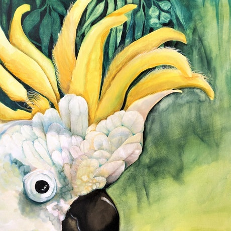 (CreativeWork) Peeping Tom - Sulphur Crested Cockatoo by Wilna ten Cate. Oil Paint. Shop online at Bluethumb.