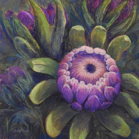 (CreativeWork) Protea  Glory by Lindy Whitton. Drawings. Shop online at Bluethumb.