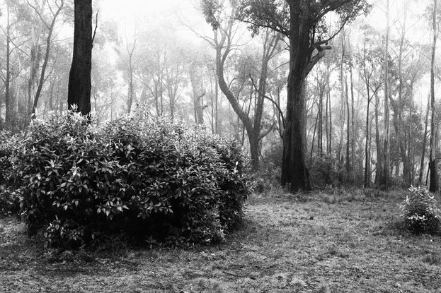 (CreativeWork) Grainy Black & White Forest Ed. 1 of 6 by Allan Maxwell. Photograph. Shop online at Bluethumb.