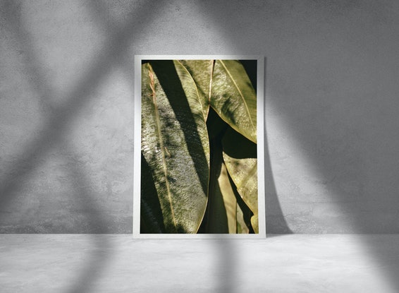 (CreativeWork) Plantas experiment IV Ed. 1 of 30 by Agus Gago. Photograph. Shop online at Bluethumb.