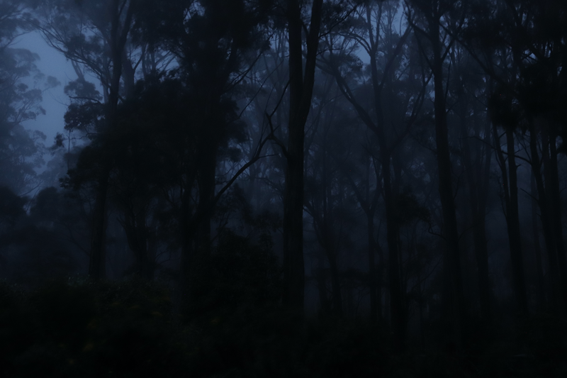 (CreativeWork) Misty Trees Dusk Ed. 1 of 5 by Allan Maxwell. Photograph. Shop online at Bluethumb.