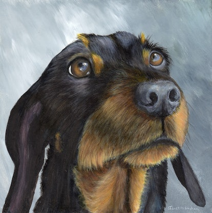 (CreativeWork) Dachshund by Janet Graham. Acrylic Paint. Shop online at Bluethumb.