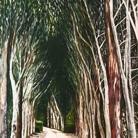(CreativeWork) AVENUE OF EUCALYPTS by LOUISE GROVE WIECHERS. Acrylic Paint. Shop online at Bluethumb.