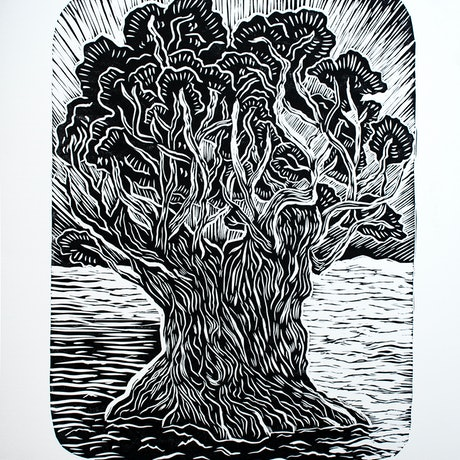 (CreativeWork) Ancient Olive Tree Ed. 2 of 15 by Matthew Broughton. Print. Shop online at Bluethumb.