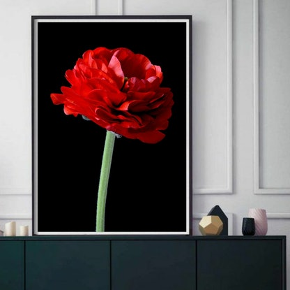 (CreativeWork) Red Ranunculus  Ed. 1 of 100 by Nadia Culph. Photograph. Shop online at Bluethumb.