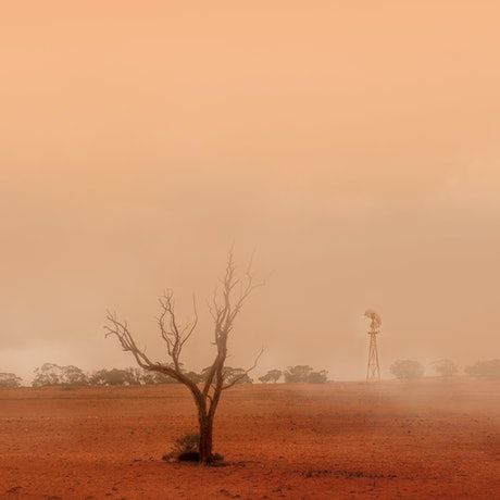(CreativeWork) Dusty day Ed. 1 of 5 by Wendy Philip. Photograph. Shop online at Bluethumb.