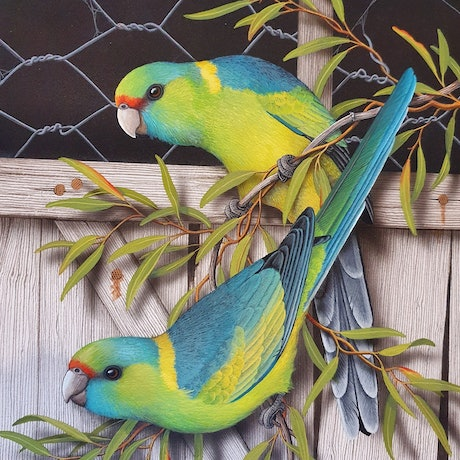 (CreativeWork) Mallee Ringnecks by Lyn Cooke. Watercolour Paint. Shop online at Bluethumb.