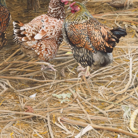 (CreativeWork) The Vineyard Hens  by Jason Roberts. Print. Shop online at Bluethumb.