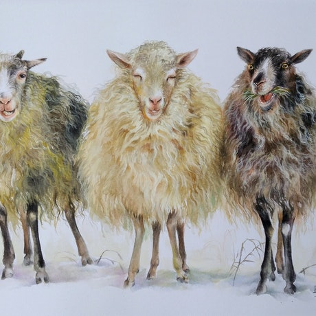 (CreativeWork) Sheep by Doudou Huang. Watercolour Paint. Shop online at Bluethumb.