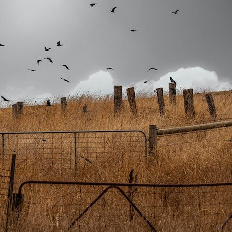 (CreativeWork) As the crow flies is never a straight line Ed. 1 of 5 by Wendy Philip. Photograph. Shop online at Bluethumb.