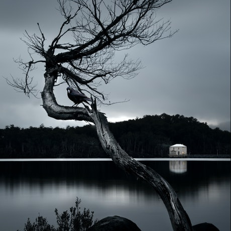 (CreativeWork) CROW BY THE LAKE Ed. 1 of 25 by Carmel Cook. Photograph. Shop online at Bluethumb.