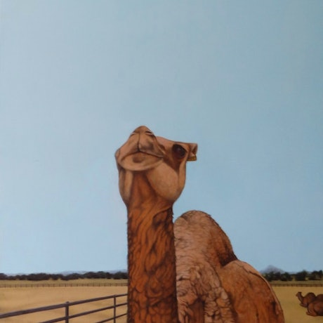 (CreativeWork) the camel by Adam Kanofski. Mixed Media. Shop online at Bluethumb.