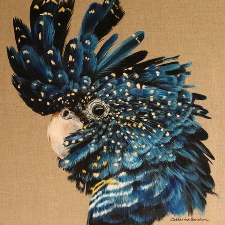 "(CreativeWork) 'Who's cockatoo.""  by CATHERINE BOREHAM. Acrylic Paint. Shop online at Bluethumb."