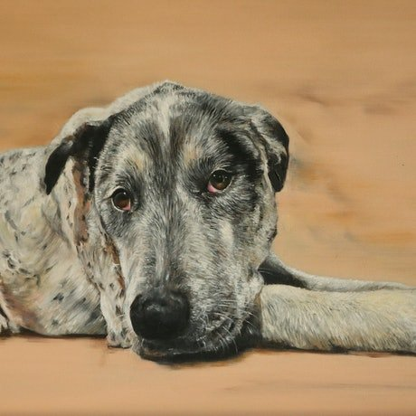"(CreativeWork) ""Feed me, walk me, love me.""  by CATHERINE BOREHAM. Oil Paint. Shop online at Bluethumb."