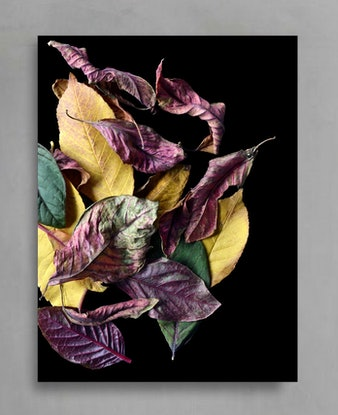(CreativeWork) Colours Of Autumn Ed. 1 of 100 by Nadia Culph. Photograph. Shop online at Bluethumb.