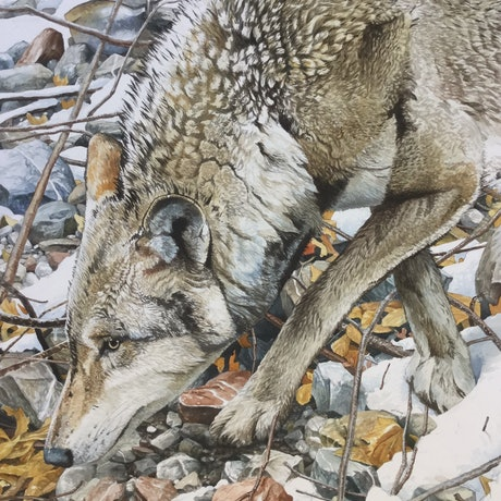(CreativeWork) On the Trail by Jason Roberts. Watercolour Paint. Shop online at Bluethumb.