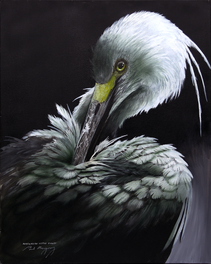 (CreativeWork) Australian Little Egret by Paul Margocsy. Mixed Media. Shop online at Bluethumb.