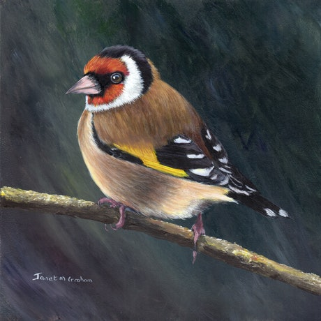 (CreativeWork) European Goldfinch by Janet Graham. Acrylic Paint. Shop online at Bluethumb.
