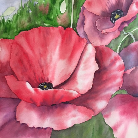 (CreativeWork) Flanders Poppies by Kathy Edwards. Watercolour Paint. Shop online at Bluethumb.