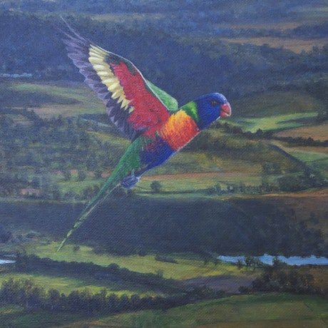 (CreativeWork) LORIKEET OVER WONGLEPONG by andrew neilan (naylan). Acrylic Paint. Shop online at Bluethumb.
