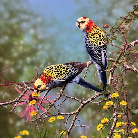 (CreativeWork) Pale Headed Rosellas by Julie Sparks. Acrylic Paint. Shop online at Bluethumb.