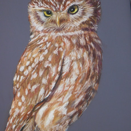 (CreativeWork) THE OWL by Jean Parker. Other Media. Shop online at Bluethumb.
