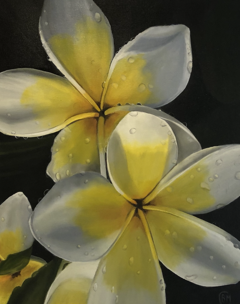 (CreativeWork) Frangipane Flowers  by Bernadette McConville. Oil Paint. Shop online at Bluethumb.