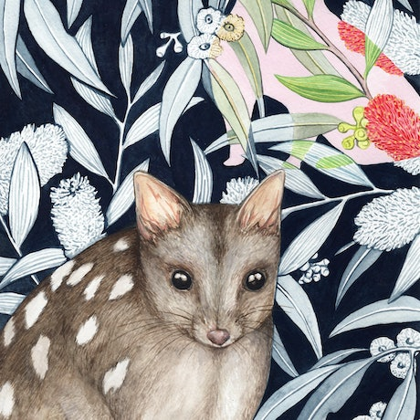 (CreativeWork) Northern Quoll by Ingrid Bartkowiak. Watercolour Paint. Shop online at Bluethumb.