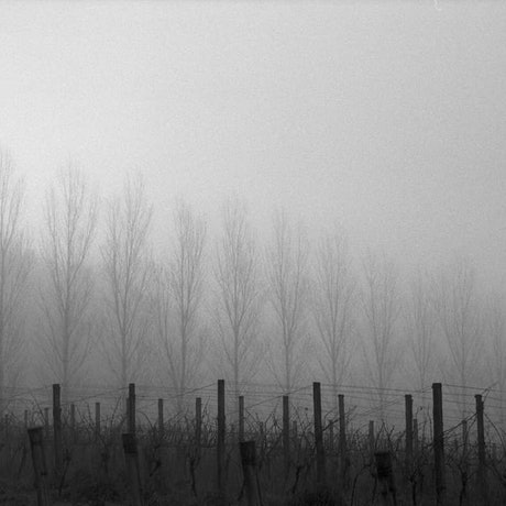 (CreativeWork) Vineyard and Fog Ed. 1 of 3 by Alex Frayne. Photograph. Shop online at Bluethumb.
