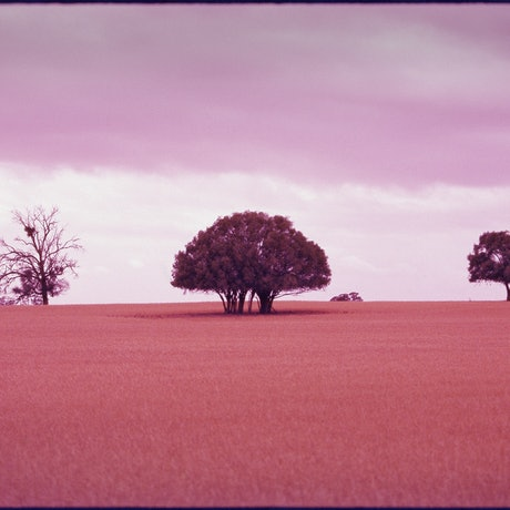 (CreativeWork) A Stand - Landscape Ed. 1 of 9 by Damian Seagar. Photograph. Shop online at Bluethumb.
