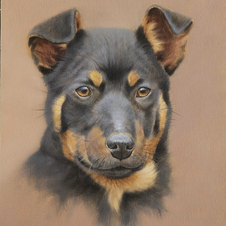 (CreativeWork) Kelpie Pup by Brett Jarrett. Oil Paint. Shop online at Bluethumb.