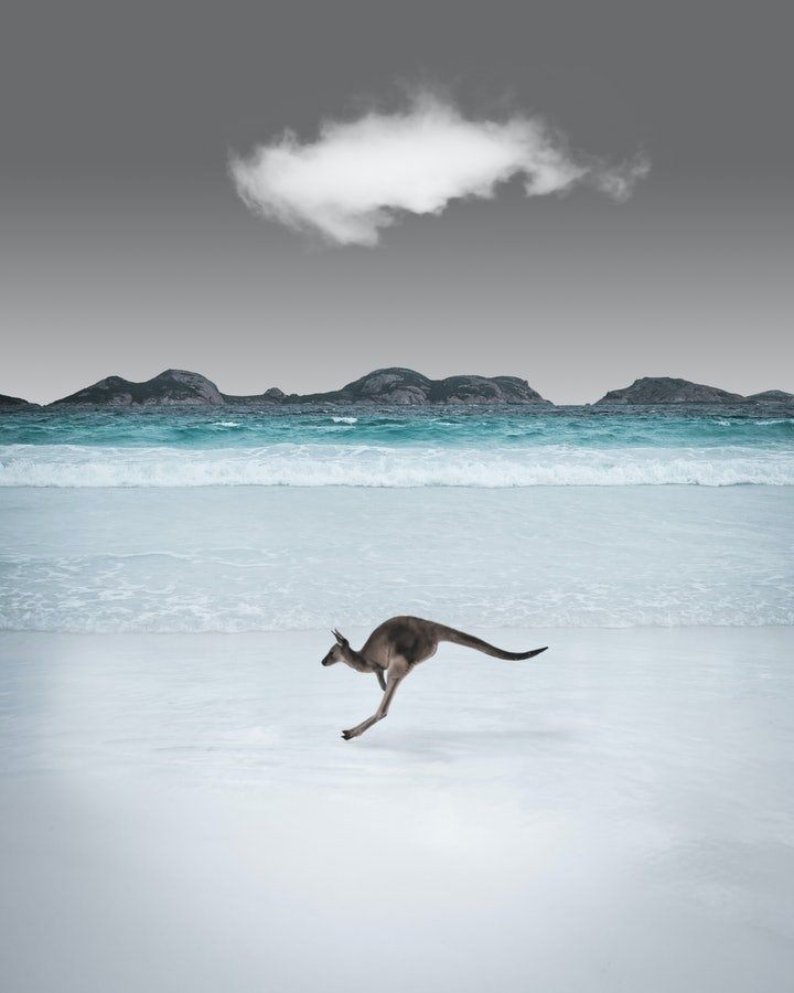 (CreativeWork) Kangaroo at the Beach Ed. 3 of 10 by Forest Harder. Photograph. Shop online at Bluethumb.