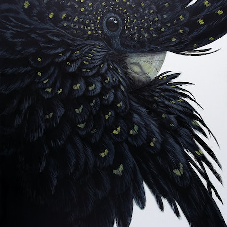 (CreativeWork) Australian Red Tailed Black Cockatoo by Paul Margocsy. Mixed Media. Shop online at Bluethumb.