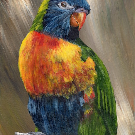 (CreativeWork) Rainbow Lorikeet by Janet Graham. Acrylic Paint. Shop online at Bluethumb.
