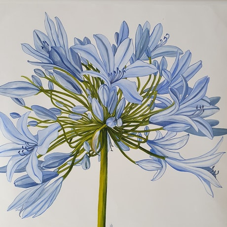 (CreativeWork) Agapanthus I by Jeanette Giroud. Acrylic Paint. Shop online at Bluethumb.