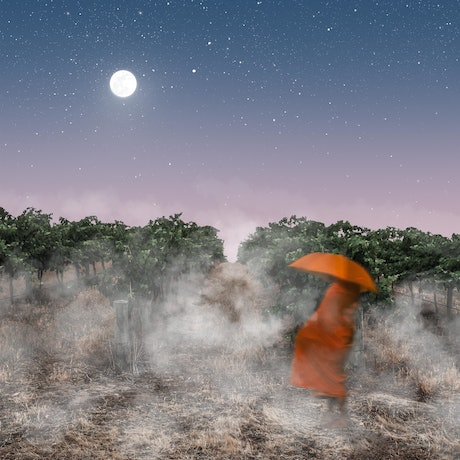 (CreativeWork) The Visitor Ed. 1 of 10 by Forest Harder. Photograph. Shop online at Bluethumb.