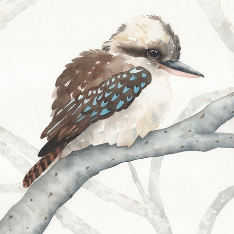 (CreativeWork) A Kookaburra Amused – Watercolour A3 by Clare McCartney. Watercolour Paint. Shop online at Bluethumb.
